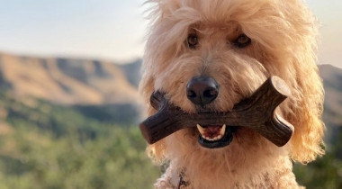 Benebone Maplestick Dog Chew Toy
